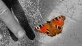 metuljcek_kaja-podhraski_m-2-e