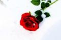 vrtnica_neja-lenart_m-2-e